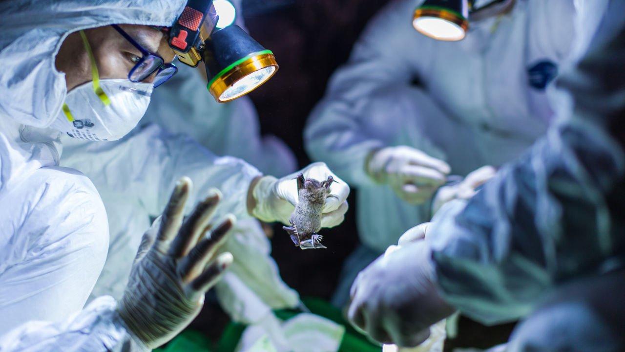 Korona virus: Jesu li se Nostradamusova velika kužna proročanstva odnosila na novi kineski virus?