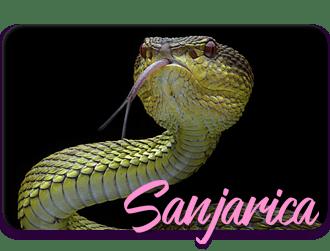 sanovnik-sanjati-zmiju